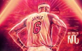 Обои NBA, Miami, LeBron James, Спина, Игрок, Леброн Джеймс, Баскетбол, Heat, Майами, Хит