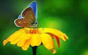 Обои макро, macro, природа, drop, цветок, butterfly, капля, flower, бабочка, nature