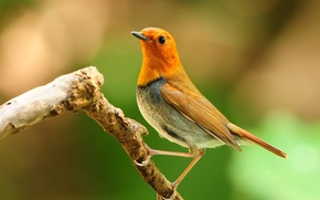Обои цвет, перья, ветка, птица, природа, клюв