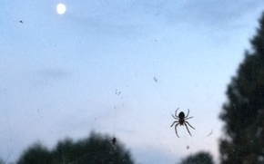 Картинка паутина, паук, сумерки