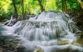 Картинка лес, вода, деревья, водопад, поток
