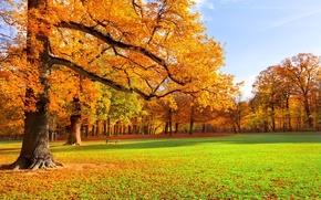 Обои краски осени, парк, скамья, листопад, деревья, осень