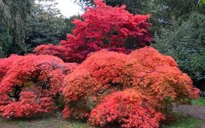 Картинка осень, деревья, парк, Великобритания, кусты, Arboretum, Westonbirt