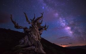 Обои night, milky way, sky, stars, tree