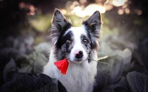 Обои друг, цветок, взгляд, собака