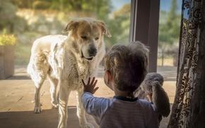 Картинка собака, дом, мальчик
