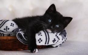 Картинка взгляд, котёнок, голубые глаза, чёрный котёнок