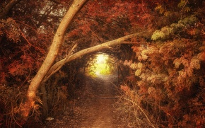 Картинка осень, лес, природа