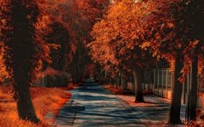 Картинка улица, обработка, Осень, дорожка, autumn, street, path, fall