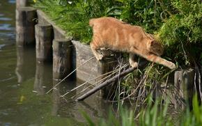 Картинка вода, ситуация, переход, рыжий кот