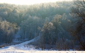 Картинка дорога, лес, снег, деревья, ветви, Зима, утро, мороз, Россия