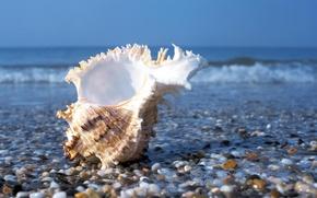Картинка море, волны, лето, вода, камни, берег, раковина, ракушка, камешки