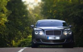 Картинка Авто, Bentley, Continental, Лес, решетка, Машина, Лого, Серый, Фары, Автомобиль
