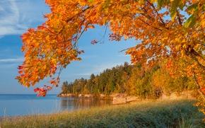 Картинка море, осень, лес, небо, листья, озеро, дерево, скалы, берег, ветка, Michigan, багрянец