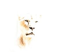 Обои природа, фон, лев