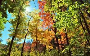 Картинка осень, небо, листья, лучи, свет, деревья