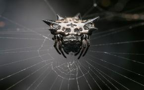Картинка spider, monster, web, arachnid