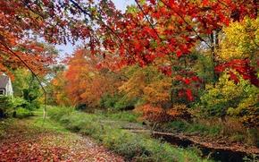 Картинка осень, лес, трава, листья, деревья, дом, река, ручей