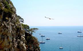 Картинка море, скала, берег, яхты, Капри
