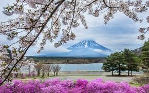 Картинка цветы, гора, весна, Япония, сакура, Фудзияма
