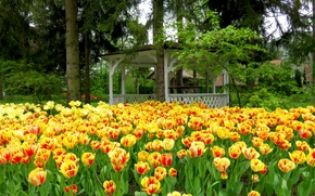 Картинка деревья, парк, ель, весна, тюльпаны, Нидерланды, беседка, tulips, spring, Netherlands, Keukenhof, gardens