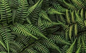 Обои папоротник, лес, листья