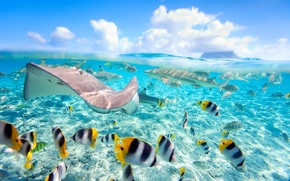 Обои tropical, fishes, sea, ocean, underwater, рыбки, море