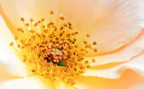 Картинка flower, yellow, petals