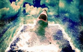 Картинка море, волны, вода, облака, Shark, Белая акула