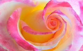 Картинка цветок, макро, роза, цвет, красота, прелесть
