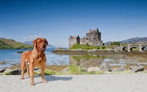Картинка пейзаж, мост, Шотландия, Scotland, Dornie, Бордоский дог, Eilean Donan Castle, Дорн, Замок Эйлиан Донан