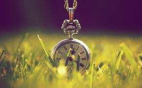 Картинка зелень, трава, макро, свет, природа, время, часы
