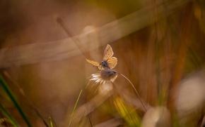 Картинка лето, трава, блики, бабочка, травинки