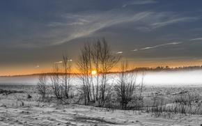 Обои зима, поле, туман