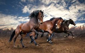 Картинка поле, земля, кони, лошади, бег
