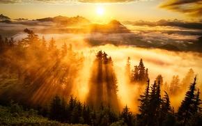 Обои лес, деревья, туман, горы, небо, облака