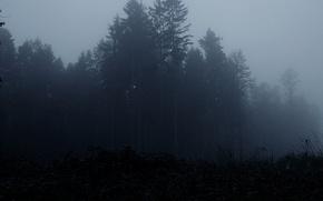 Обои лес, деревья, туман, мрак