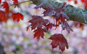Картинка осень, листья, природа, дерево, ветка