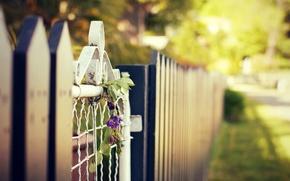 Картинка цветы, широкоэкранные, HD wallpapers, обои, ограда, зелень, полноэкранные, flower, солнце, ограждение, background, fullscreen, макро, широкоформатные, ...