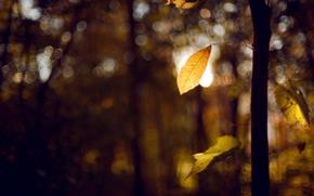 Обои листья, деревья, осень