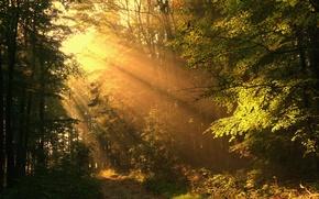 Картинка дорога, осень, лес, лучи, солнечные