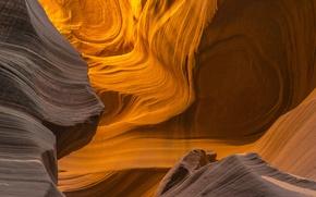 Картинка каньон, Аризона, США, Arizona, Антилопы
