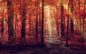 Картинка дорога, осень, лес, листья, лучи, свет, деревья, природа, красные, тропинка, багровые