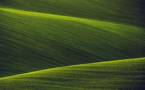 Картинка природа, поля, зеленые