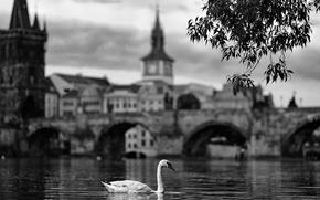 Картинка swan, river, bridge