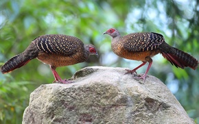 Картинка птицы, камень, перья, хвост