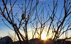 Картинка небо, солнце, закат, ветки, дерево, дома