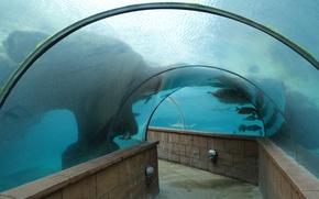 Картинка Atlantis, Aquarium, Underwater