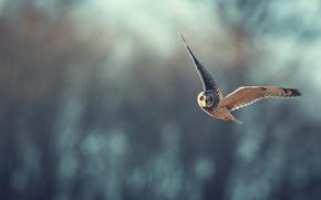 Картинка сова, полёт, боке