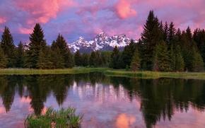 Картинка лес, небо, облака, деревья, горы, озеро, отражение, USA, США, forest, Wyoming, sky, trees, mountains, clouds, ...